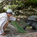 beim Schildkröten füttern auf Curieuse, Seychellen