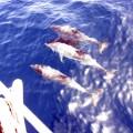 Delfine Segelboot