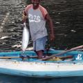 Angebot frischer Fisch